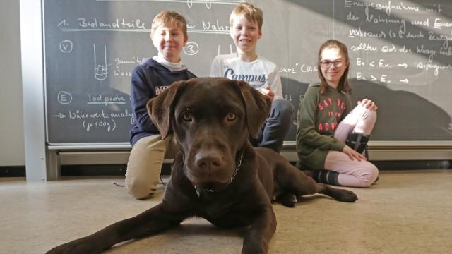Schule Hundegestützte Pädagogik