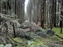 Holzernteaktion im Perlacher Forst, 2011