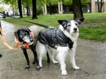Hunde mit Mantel in München, 2017