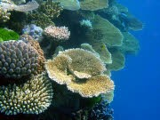 Gefährdeter Lebensraum, Die Verwandlung der Ozeane, dpa