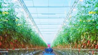 Umwelt Landwirtschaft