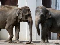 Elefant Steffi gestorben