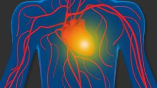 human heart and blood circulation