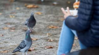 Koeln Symbolfoto von Tauben in der Innenstadt gefuettert von Touristen *** Cologne Symbolic image f