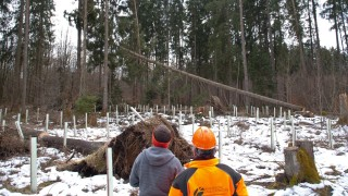 Waldarbeiter Waldarbeiter