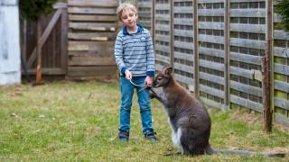 Känguru als Familienmitglied