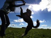 Spiel mit Hund im Sonnenschein