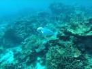 Roboter Fisch erkundet den Meeresboden (Vorschaubild)