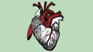 Medizin Transplantationsmedizin