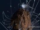 Anglerfisch: Tiefseefilmern gelingen spektakuläre Aufnahmen (Vorschaubild)