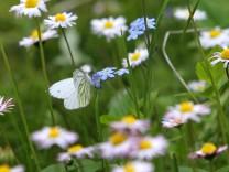 Immer weniger Blumenwiesen in Nordrhein-Westfalen