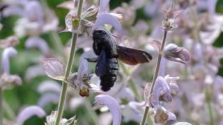 Umwelt Insekten in München