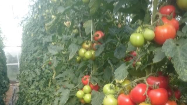 Süddeutsche Zeitung Erding Von Eiern bis Tomaten