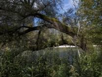 Werden die Isarauen Nationalpark?