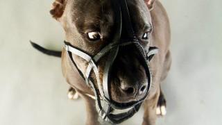 Unglück und Unfall Hundeattacke in Niedersachsen