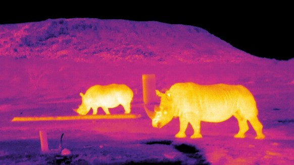 Infrared image of rhinos in South Africa.