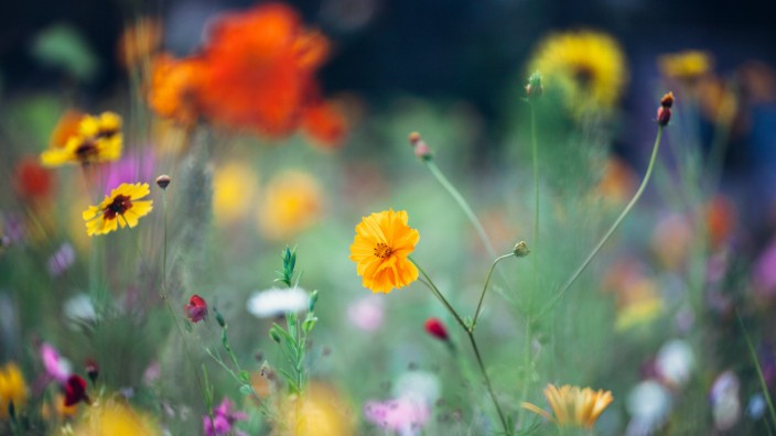 Sommerblumen *** summer flowers PUBLICATIONxINxGERxSUIxAUTxONLY photocase_1753163