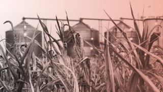 Ethanol Industry Threatened By Midwest Drought