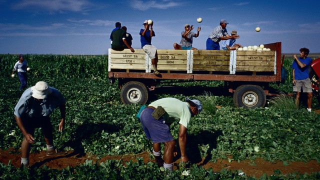 Farm workers in Orania, South Africa