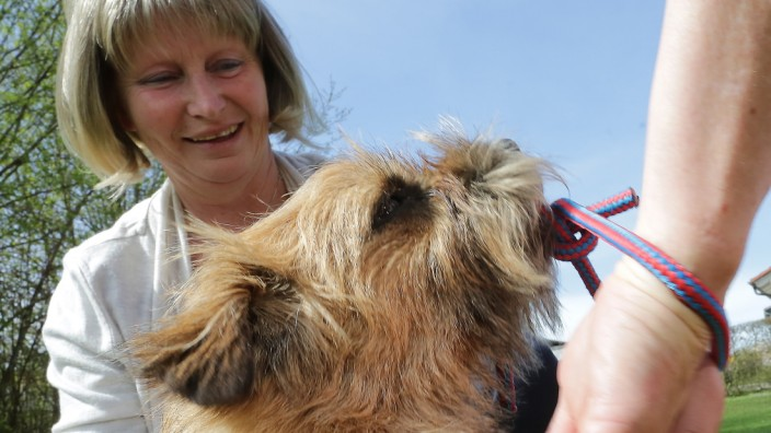 Weltrekordversuch mit Hund: Terrier soll Knoten lösen