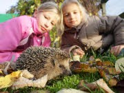 Kinder und Natur; dpa