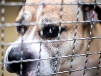 """Hund ´Chico"""" nach tödlicher Attacke eingeschläfert"""
