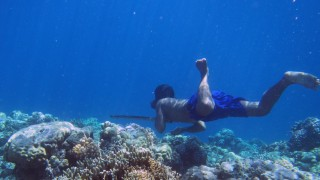Bajau 70 Meter Unter Wasser Dank Großer Milz Gesundheit