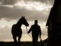 Tattersalls Horse Auctioneers; Pferde