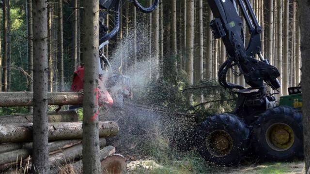 Dachau Gefahr für die Wälder