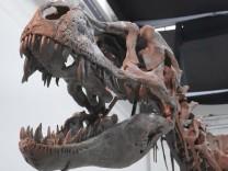 Vorschaubild T-Rex-Interview