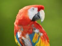 Ankunft von Papagei 'Rosalinda'