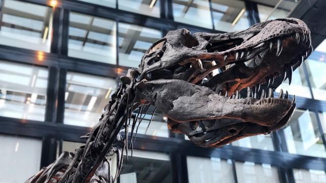 Dinosaurier Wissenschaft
