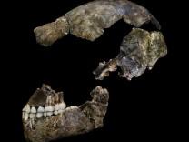 Schädel eines Homo naledi