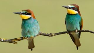 Vogelbilder von Tiago Caravana für die Reise, Alentejo, Portugal, von Hans Gasser