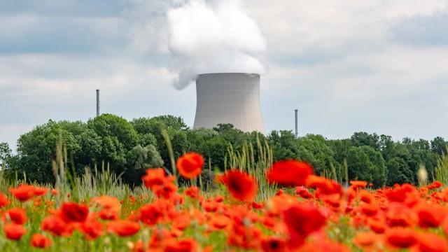 Mohnfeld vor Kernkraftwerk