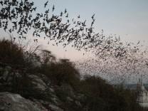 Bats (image)  Forschungsverbund Berlin