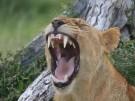 Gefährdete Naturstätten 1/4: Das Selous Reservat (Vorschaubild)