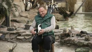 Tatort aus Münster: Schlangengrube - Bei seinen Undercover-Ermittlungen im Zoo schließt Tierpfleger Frank Thiel (Axel Prahl) den Pinguin Sandy in sein Herz.