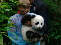 A zoo employee carries the four-month-old female giant panda cub, born to mother Liang Liang and father Xing Xing, on display to the public for the first time at the National Zoo in Kuala Lumpur