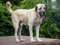Prozess um tödliche Hunde-Attacke in Stetten