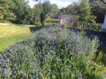 Berg Blumenwiese