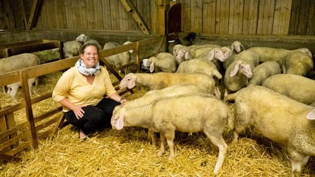 Entblutung lebender Schafe - Sachkundekurs Grub