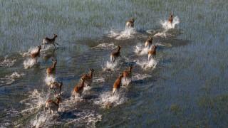 Schwarznasen Impala Schwarznasenimpala Schwarznasen Antilope Schwarznasenantilope Impala Aepyce