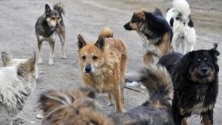 MURMANSK RUSSIA OCTOBER 3 2017 Stray dogs in a street Lev Fedoseyev TASS PUBLICATIONxINxGERxAU