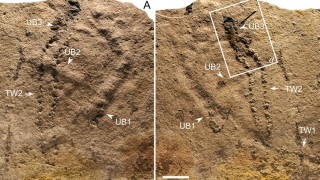 Trackways and Burrows Excavated in Situ From the Ediacaran Dengying Formation