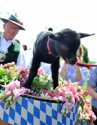 Bachhausen Goaßbockfest