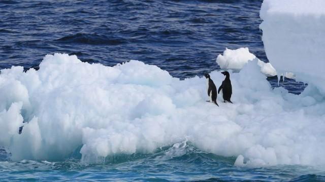 Adelie-Pinguine in der Antarktis