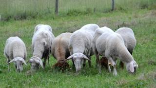 Süddeutsche Zeitung Dachau Schafskälte nach den Unwettern