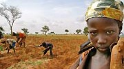 Feld in Afrika, Reuters