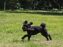Hundefreilauf